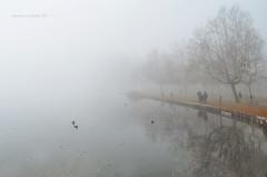 passeggiata uggiosa (pamo67) Tags: pamo67 gloomywalk nebbia fog lago lake people filari rows alberi trees riflessi reflections acqua water grigio grey pasqualemozzillo
