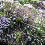 Forest Fungi thumbnail