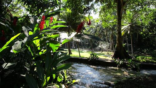 In the Dark Jungle  @ Jamaica -  Ocho Rios