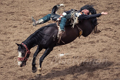 Calgary Stampede 2016 (tallhuskymike) Tags: calgary stampede event calgarystampede rodeo cowboy horse action alberta 2016 outdoors greatestoutdoorshow