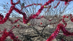 El Paso to Columbus-Highway 9 sparklies 2b (Mzuriana) Tags: elpaso texas newmexico columbus highway9 decoratedtree redsparklies red