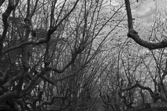 Silent Cold Afternoon (Guille .) Tags: frio cold canon t3 1100d arboles trees bw winter invierno hiver inverno arvores arbres