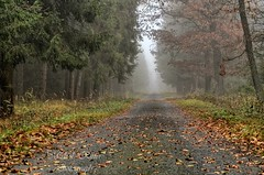 Autumn paths (Michal Ritter) Tags: autumn czechrepublic fog national landscape tree morning green mysterious yellow road country forest colors