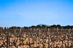 A l'abri du Mont Ventoux (Phil_Heck) Tags: vigne paysage montventoux ventoux extérieur vaucluse provence paca vignoble cep landscape bleu