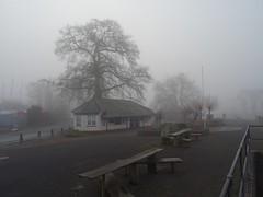 Foggy steamer quay (Phil Gayton) Tags: bench building oak tree silhouette river dart totnes devon uk steamer quay mist fog quercusrobur