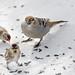 Winter Feeder Birds