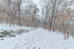 Winter Road (Picocoon图茧) Tags: winter snow cold road tree nature bare footprints
