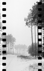 Bronica SQ-A-060-002 (michal kusz) Tags: bronicasqa zenzanon 110 135 35mm 120to135 frame film bw blackandwhite landscape forest format monochrome medium monochromatic trees snow poland