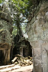 Angkor_Ta Prohm_2014_33