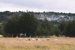 Coyhaique y alrededores (Christopher León Vilches) Tags: ovejas paisajes patagonia chile carretera austral coyhaique aysen animales