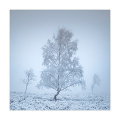 Ghosts (Dave Fieldhouse Photography) Tags: tree trees woodland snow ice winter fog mist peakdistrict derbyshire square monochrome weather forest fujixpro2 fujifilm fuji wwwdavefieldhousephotographycom nationalpark minimal