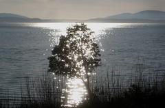 Flickering Samish Bay - Mar 19, 2019 (Jeffxx) Tags: bay 2019 march samish skagit water sun reflection chuckanut manor tree view
