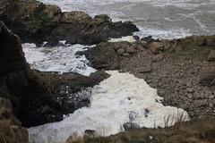 Spume Foam,Cliffs,Collieston_Mar 19_459 (Alan Longmuir.) Tags: cliffs grampian aberdeenshire collieston spume spumefoam