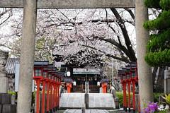 春の回廊 (tvsa) Tags: 京都 春 桜 sel1635z α7r3 kyoto spring