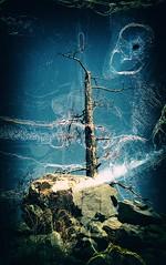 Forsaken (Crusty Da Klown) Tags: okanaganmountianprovicialpark forsaken tree rocks sky blue britishcolumbia canada bc canon kodak film