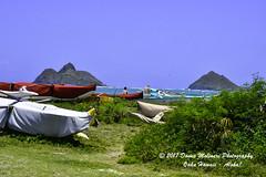 OAHU-HAWAII_1D51880-01 (Donna Molinari Photography) Tags: sanjose ca usa