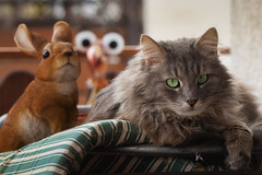 I can't sleep when they are watching me ! (FocusPocus Photography) Tags: fynn fynnegan katze kater cat tier animal haustier pet osterhase easterbunny