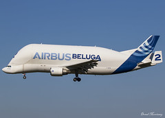 Airbus Transport International A300-608ST Beluga (2) F-GSTB (birrlad) Tags: toulouse tls airport france aircraft aviation airplane airplanes airline airliner airlines airways arrival arriving approach finals landing runway airbus transport international a300 a300608st beluga fgstb bremen bga151b cargo freighter freight