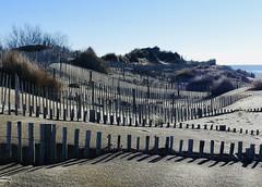 Dunes de l'Espiguette, le Grau du Roi (laudato si) Tags: espiguette gard sable dunes camargue