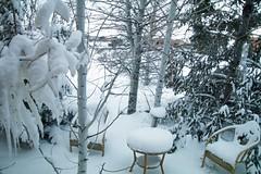 Snowy (Anna Gurule) Tags: snow winter white snowfall