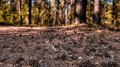 St. Petersburg suburbs, european countryside, Sestroretsk, (Russia) #2, 08-2018, (Vlad Meytin, vladsm.com) (Instagram: vlad.meytin) Tags: europeeuropean khimporiumco meytin russia russiancountryside sestroretsk stpetersburg vladmeytin forest green outdoor photography pinetrees pines trees vladsm vladsmcom россия сестрорецк leningradoblast ru