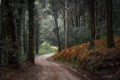 Way through the forest (jorgeverdasca) Tags: flickrheroes winter goth landscape pathway way forest woodland nature sintra portugal