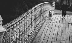 happy dog (kareszzz) Tags: canon6d carlophoto newyork2018 centralpark newyork nyc us usa dog walking bridge arch architecture blackwhite monochrome ef24105 photowalk streetphotography