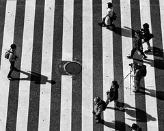 shadow crossing (gro57074@bigpond.net.au) Tags: stphotographia shadowcrossing pedestriancrossing zebracrossing crowds photography famousplaces photoshoot streetcrossing candidstreet candid people monochrome monotone mono blackwhite bw f80 105mmf14 artseries sigma d850 nikon 2019 february guyclift tokyo japan shibuyacrossing crossing shibuya