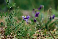 kaeda wildflowers (l e o j) Tags: miyazaki kaeda valley keikoku fujifilm xt1 宮崎 加江田渓谷 野草 wildflower