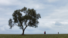 Olivo (eMuFo) Tags: canonefs1018 canon750d canon tree olivo orizzonte panorama landscape sky outdoor countryside italy italia
