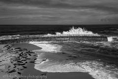 Seals and splash (borders92109) Tags: nd1000 neutraldensityfilter slowshutter black white seals waves ocean sky sea seascape lajolla california sandiego beach sony a7ii tamron 2875 f28