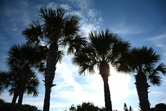 Florida_2019__8376 (newspaper_guy Mike Orazzi) Tags: pinellascounty florida gulfofmexico travel photographer photography beach sand outside outdoors nature saltwater thesea salty