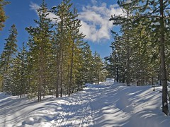 mp1130827Larkspur (thom52) Tags: thom bend central oregon xc skiing snow sno park meissner