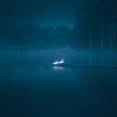 Together (unciepaul) Tags: swans landscape deene park water lake