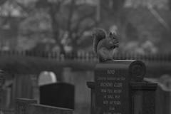 Squirrel (Tyrant_Lizard) Tags: squirrel