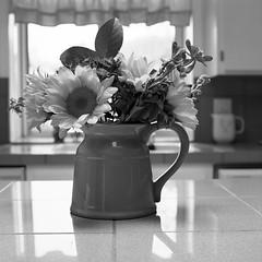 Flowers in a Pot (Scott Micciche) Tags: hasselblad2000fcm mediumformat ilford ilfordphoto ilfordfilm 80mm blackandwhite sixbysix fa1027