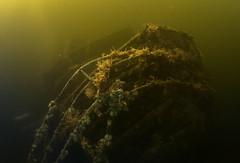 Charna stern (Jlynott) Tags: canonpowershotg7xmkii canong7xmkii g7xii g7xmkii