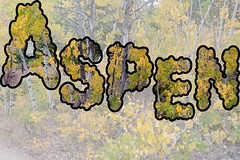 Aspen (Rocky Pix) Tags: aspen 4wd road railroad grade trekkers greeleysaltlakeandpacificrailway denverboulderwesternrr narrow gauge switzerlandtrail goldhillstation peaktopeakhighway indianpeakswildernessarea ward rockies boulder county colorado rockypix rocky mountain pix wmichelkiteley f16 125thsec 52mm 2470mmf28g nikkor normalzoom monopod