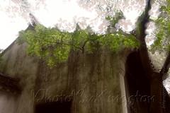 43079026601_497f79cb23_b (Kingston4 Landscape) Tags: suzhou light rain fujifilm xt1 painterly feel m42 helios442 258 manual lens colors old bokeh bright watercolor painting