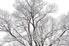 1PRO_1854 (Radu Pavel) Tags: radu radupavel pavel fotononstop cosmos ©radupavelallrightsreserved ©radupavelallerechtevorbehalten ©radupaveltodoslosderechosreservados ©radupavel版権所有 nature natur naturaleza 自然 winter invierno 冬 outdoor alairelibre imfreien ルーマニア world welt mundo 世界 2019 landscape landschaft paisaje 風景 tree baum árbol 木