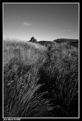 Au Bout du Chemin..... (faurejm29) Tags: faurejm29 canon campagne sigma nb nature monochrome landscape ruine