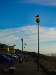 All Along the Watchtowers (Steve Taylor (Photography)) Tags: bird seagull gull carpark blue yellow white bench seat light lamp lamppost newzealand nz southisland canterbury christchurch newbrighton beach dunes ocean pacific sea seaside cloud sky