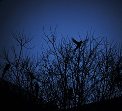 Pictures of you (Elena SGnight) Tags: sky blue bluesky late dark sunset cold winter animal animals bird birds fly flying contrast darkness creep creepy horror terror vegetation tree trees plants nature natural park landscape skie skies clouds city urban
