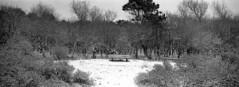 The Snow Seat (selyfriday) Tags: selyfriday wwwnassiocomempty nassiocom xpan hasselblad 35mm 45mmf4 panorama wide analogue film kodak kodak400 rodinal 125 20˙c 7minutes bakkum netherlands holland dutch winter snow dusting bench park