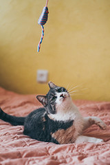 (Saulė Ad photography) Tags: cat kitty pet cute kitten play pose model moew animal queen owner nature home indoor lithuania lietuva kaunas canon portrait photoshoot photography photo