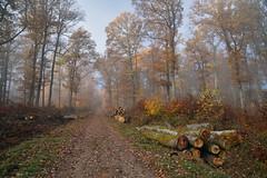 De la forêt aux grumes (Excalibur67) Tags: nikon d750 sigma globalvision art 24105f4dgoshsma paysage landscape forest foréts arbres trees grume chemin automne autumn brume