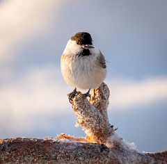 Front View (MrBlackSun) Tags: bird birds nature photography birdlover birdlovers nikon d850 hideout birdhideout kuusamo kuusamonaturephotography eaglehideout