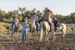 Pause des gardians (Xtian du Gard) Tags: xtiandugard camargue provence gardians france nature chevaux