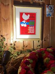 3 Days (baccarati) Tags: flowershow phs philadelphiaflowershow flowers convention showcase philly tradeshow philadelphia pennsylvaniaconventioncenter pennsylvania woodstock poster woodstock1969 1969