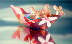 Flower Boat (Through Serena's Lens) Tags: crazytuesday reflections flower driedhydrangeas boat paper closeup tabletop stilllife colorful mirror origami